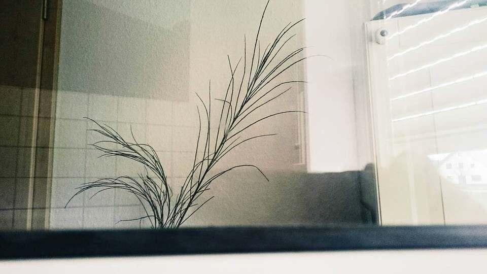 Eine Pflanze im Bad