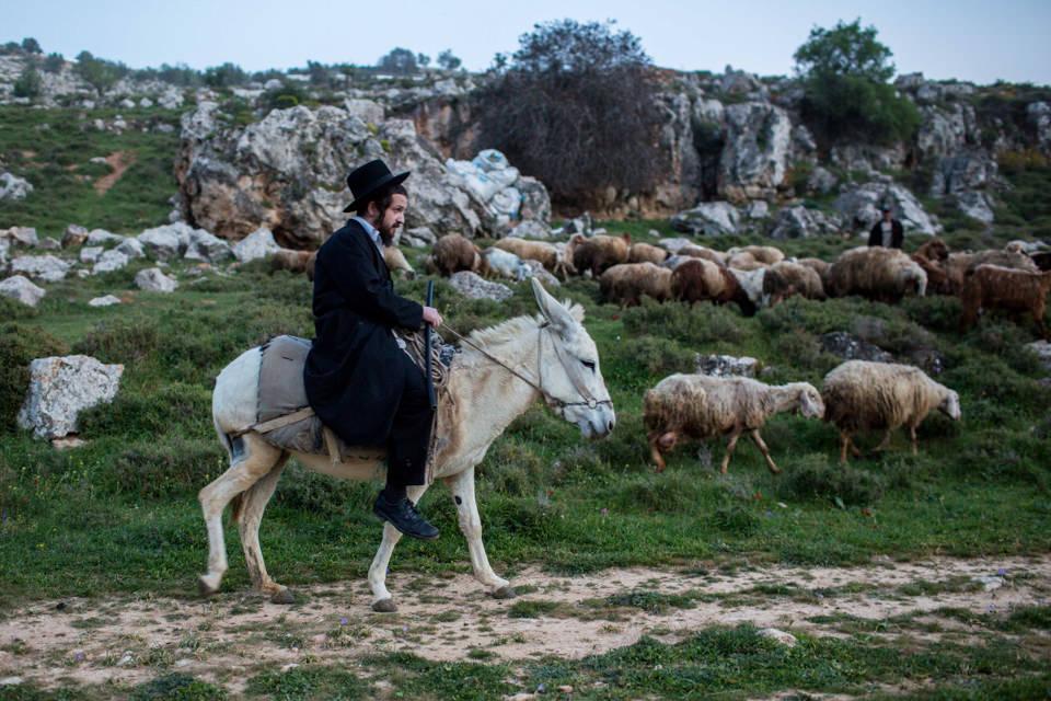 Ein orthodoxer Jude reitet auf einem Esel