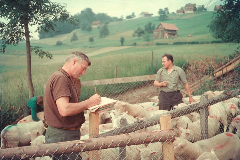 Zwei Männer bei der Landarbeit