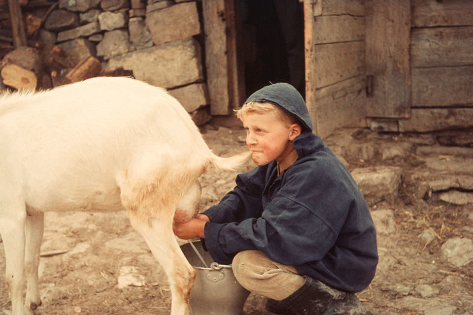 Ein Junge melkt eine Ziege