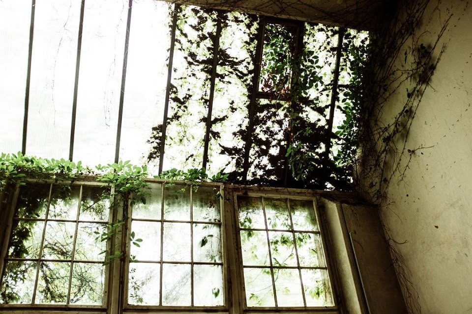 Von Pflanzen überwucherte Fenster.