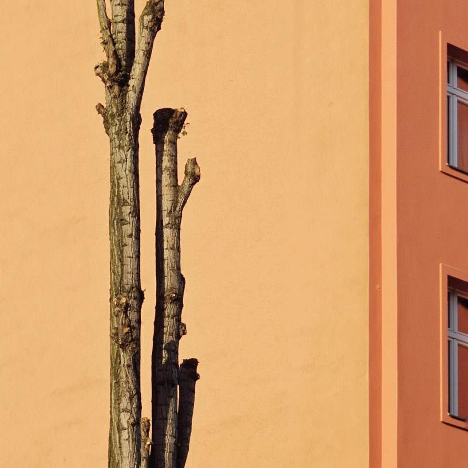 Baumstämme vor einer orangen Fassade.