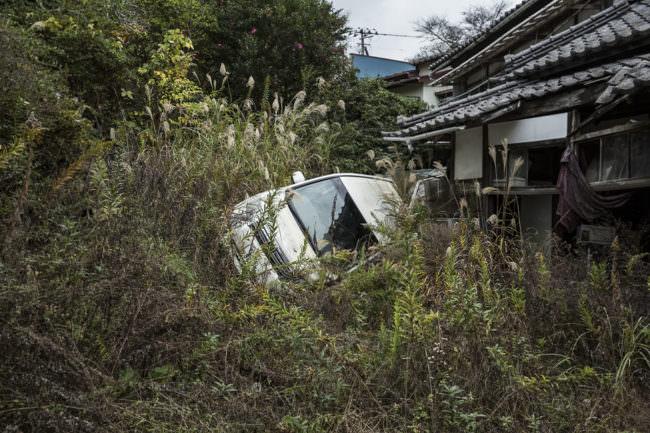 Ein Auto liegt im Gebüsch
