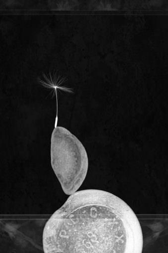 Ein Blumensamen balanciert auf einem Stein