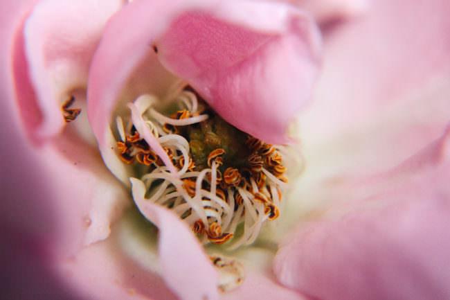 Eine Nahaufnahme einer Blüte