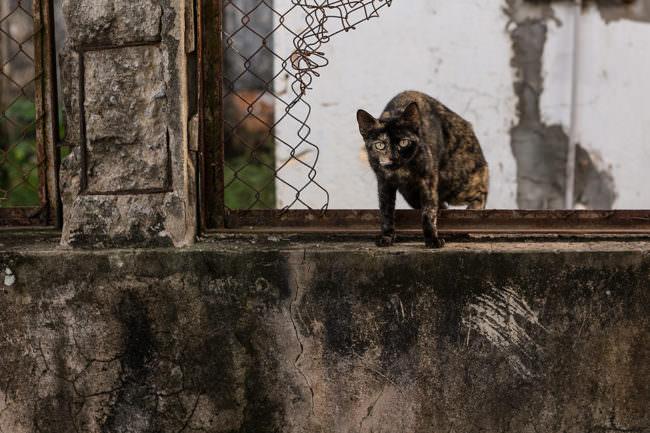 Eine Katze an einer Mauer