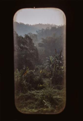 Blick auf den Dschungel durch ein Fenster