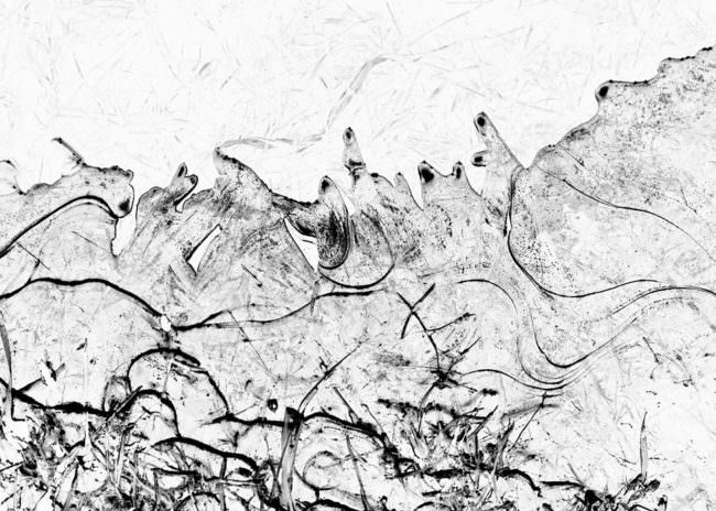 Abstrakte Schwarzweißfotografie von einem natürlichen Muster.