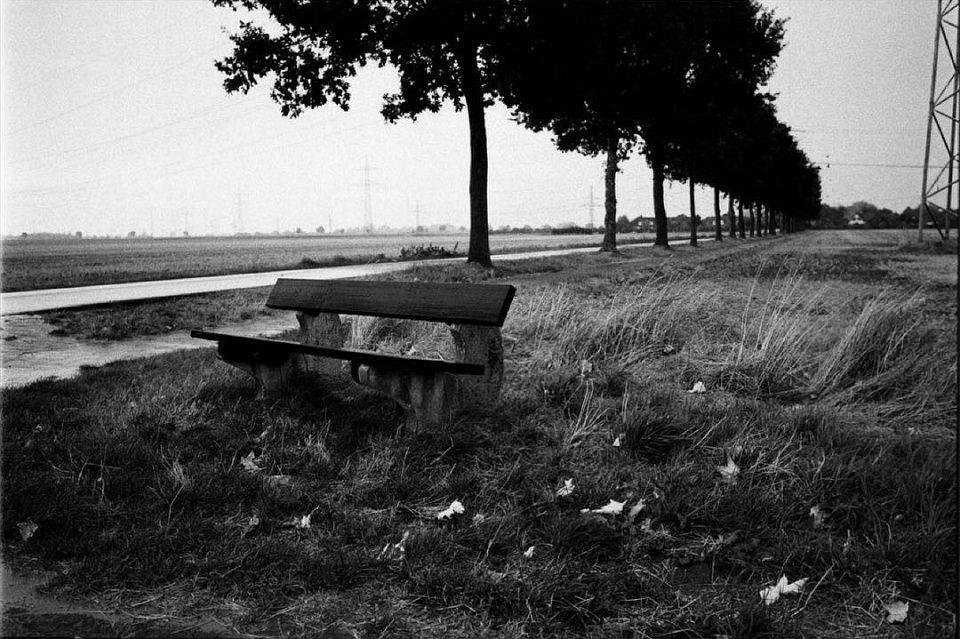 Holzbank an einem mit Bäumen gesäumten Feldweg.