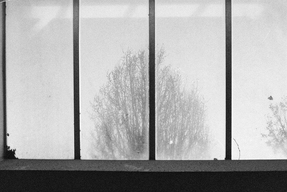 Reflexion eines Baumes in einem vierteiligen Fenster.