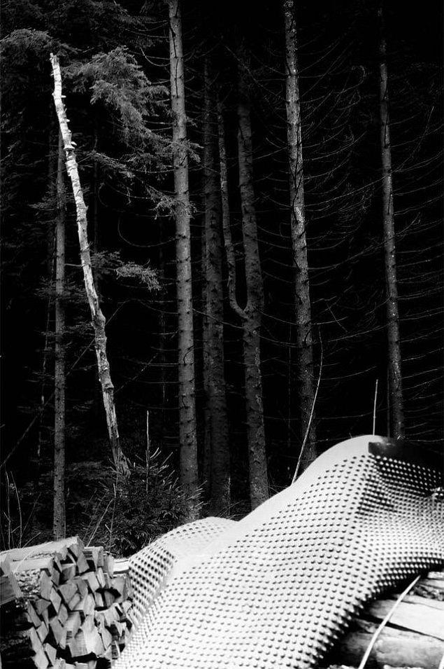 Aufgestapelte Holzscheite, teilweise abgedeckt, vor einem dunklen Waldrand.