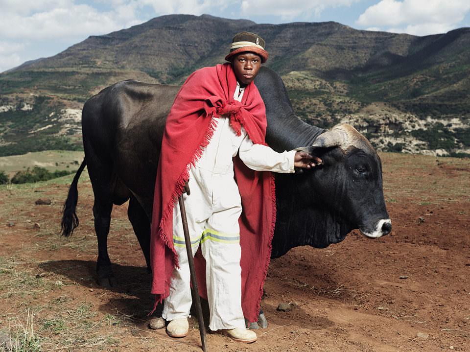 Ein Mann mit einer Kuh