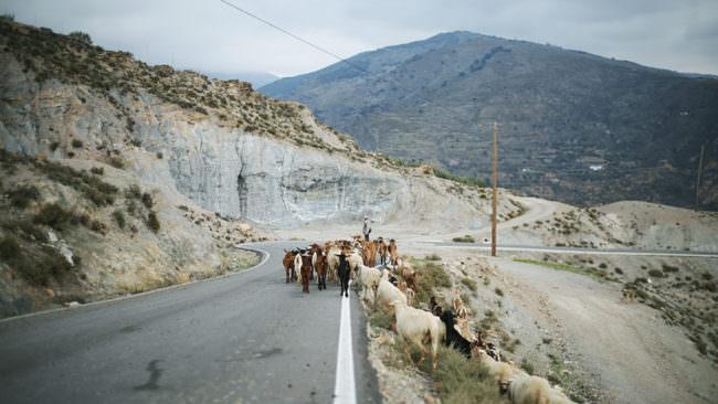 Ziegen und ein Hirte auf einer Straße