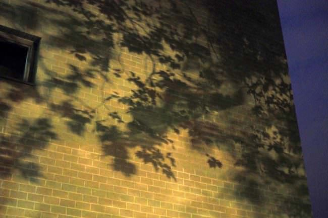 Blätterschatten an einer Hausmauer