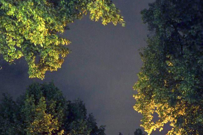 Himmer zwischen Baumkronen