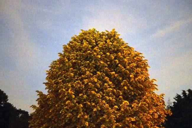 Ein Baum vor dem Himmel