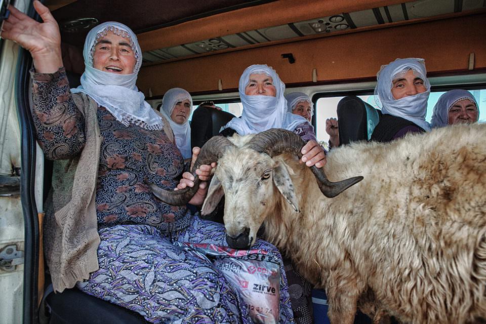Frauen in einem Bus mit Ziege