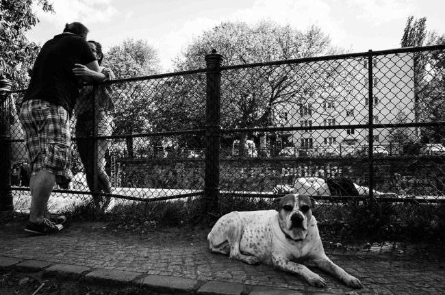 Ein Hund auf der Straße