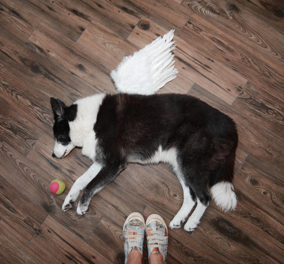 Ein Hund, der auf dem Boden liegt, mit Engelsflügeln.
