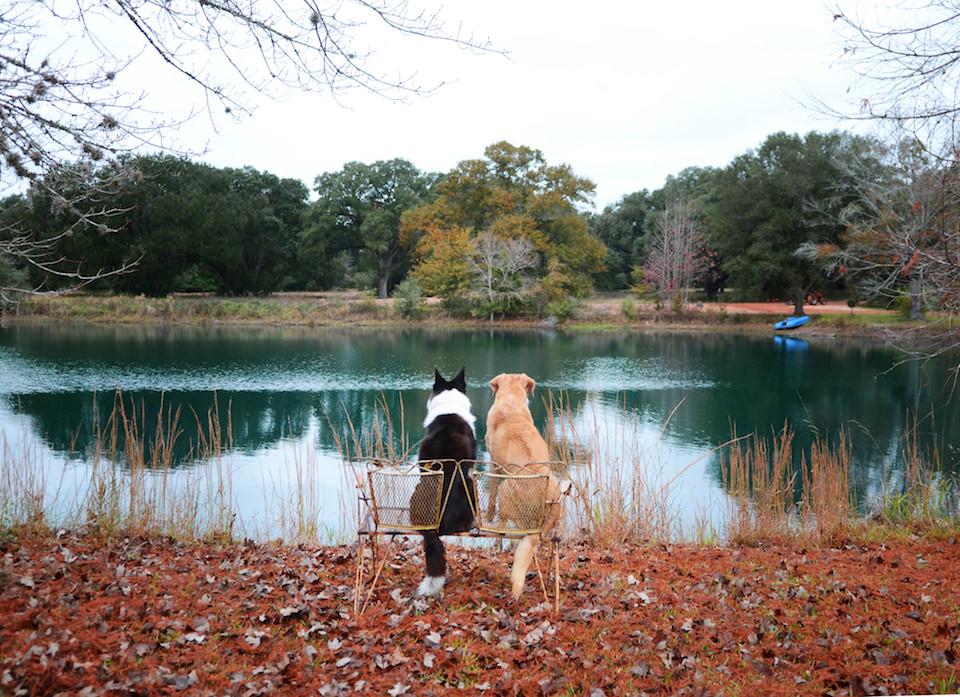 Zwei Hunde, die auf einer Bank sitzen und über einen See blicken.