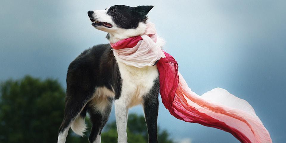 Ein Hund mit einem Schal.