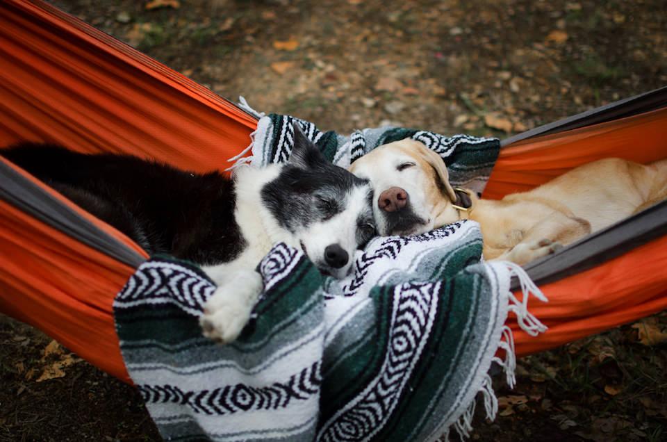 Zwei Hunde, die auf einer Hängematte miteinander kuscheln.