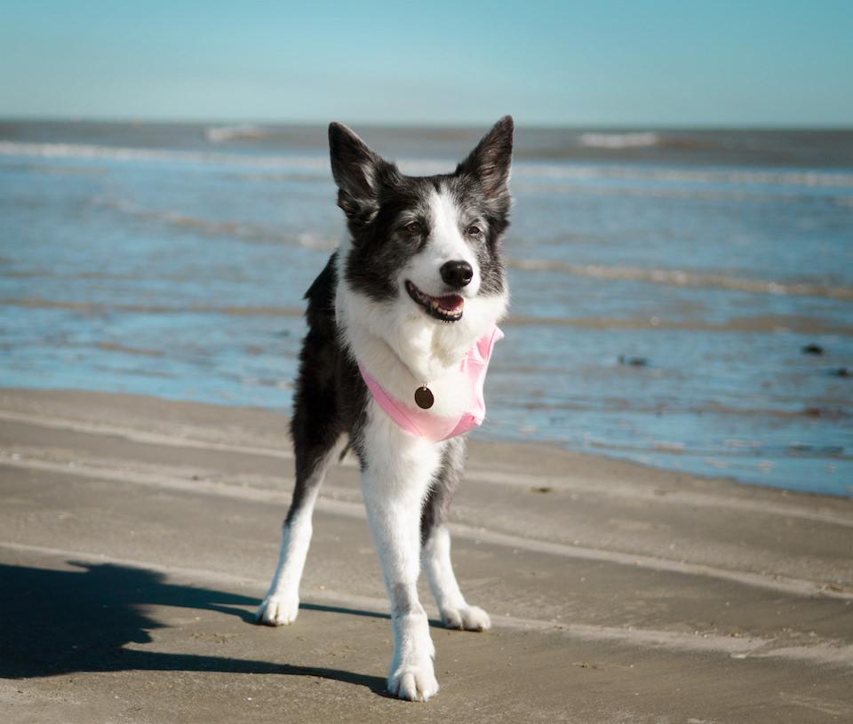 Ein Hund mit drei Beinen, der am Strand steht.