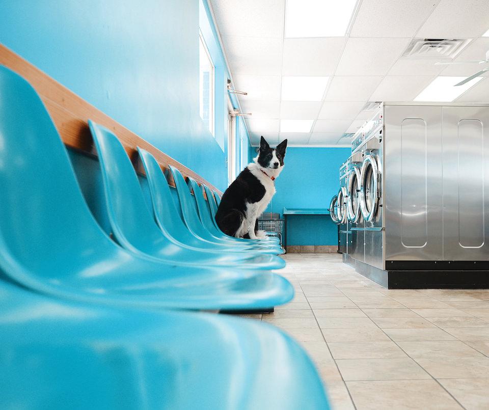 Ein Hund, der auf einem Stuhl im Waschsalon sitzt.
