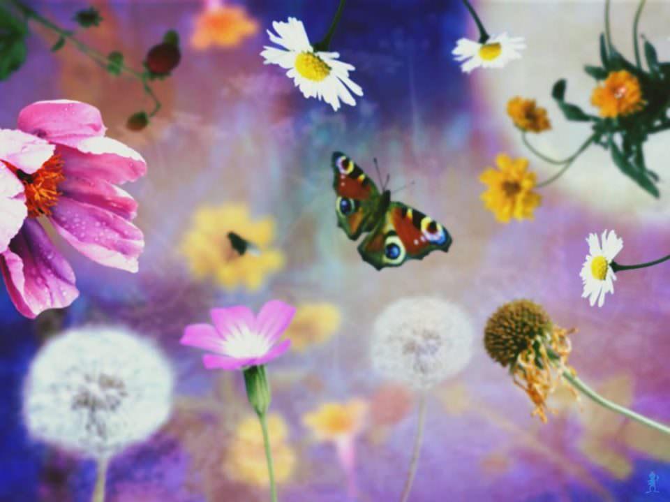 Buntes Blumenwirrwarr  in dem ein Schmetterling fliegt.