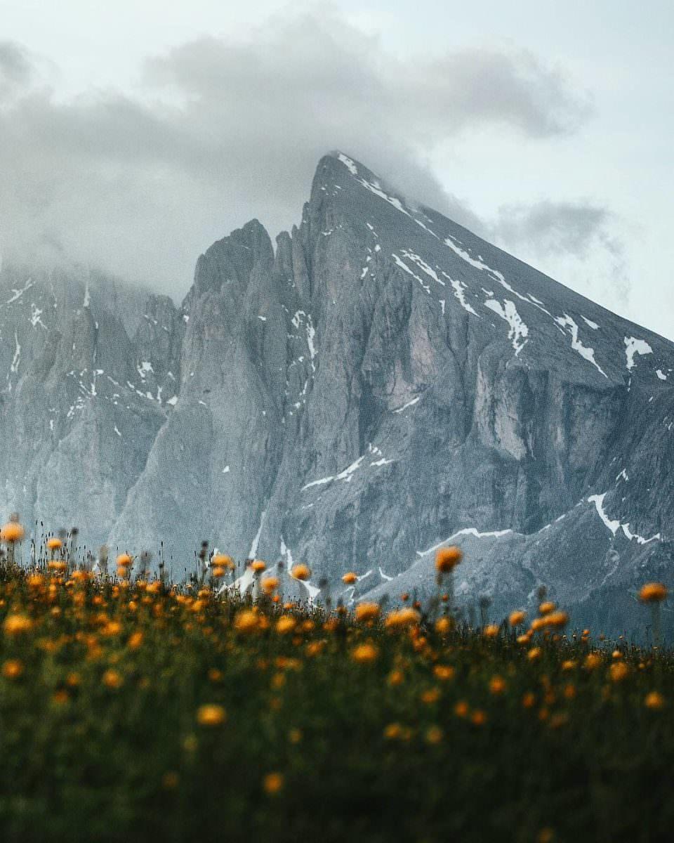 Ansicht eines schroffen Bergmassivs, im Vordergrund verschwommene gelbe Blumen.