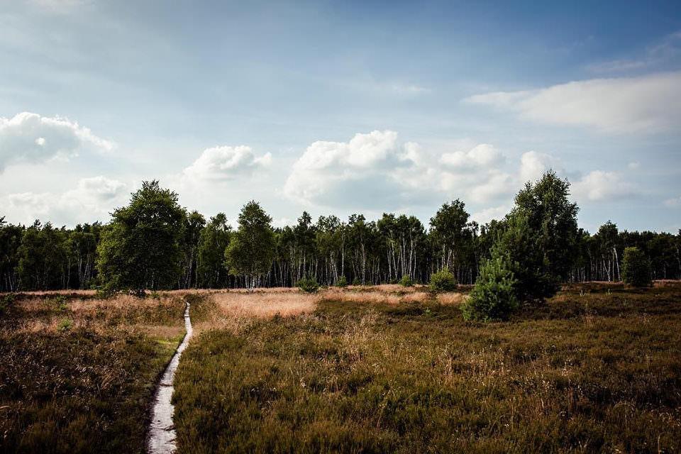 Ein Weg durch eine Moorlandschaft