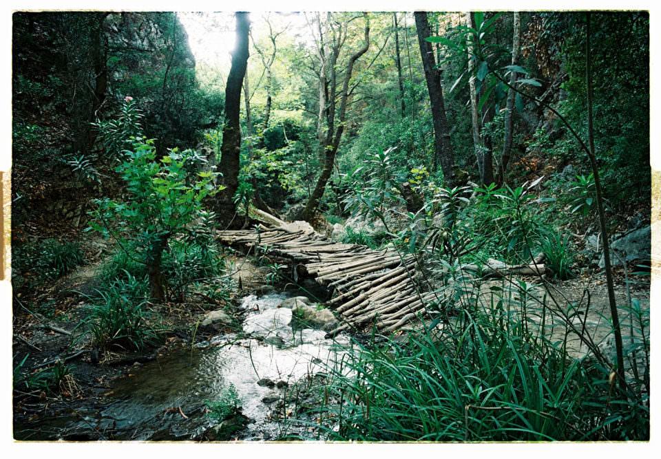 Wald mit Holzbrücke über Wasser