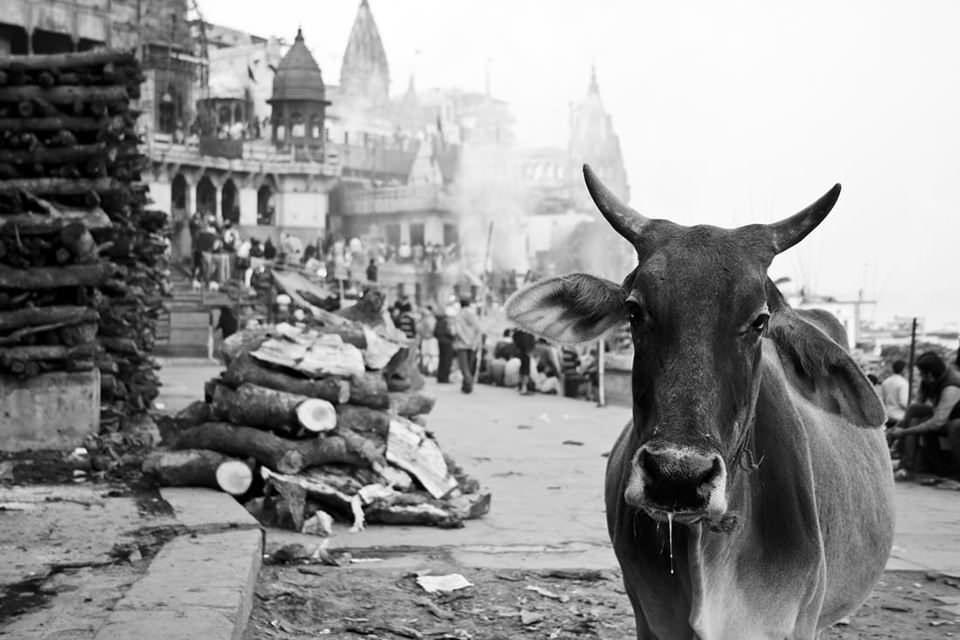 Eine Kuh auf einem Platz
