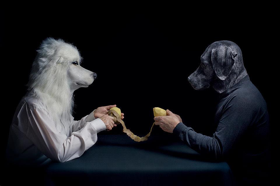 Zwei Hunde schälen Kartoffeln