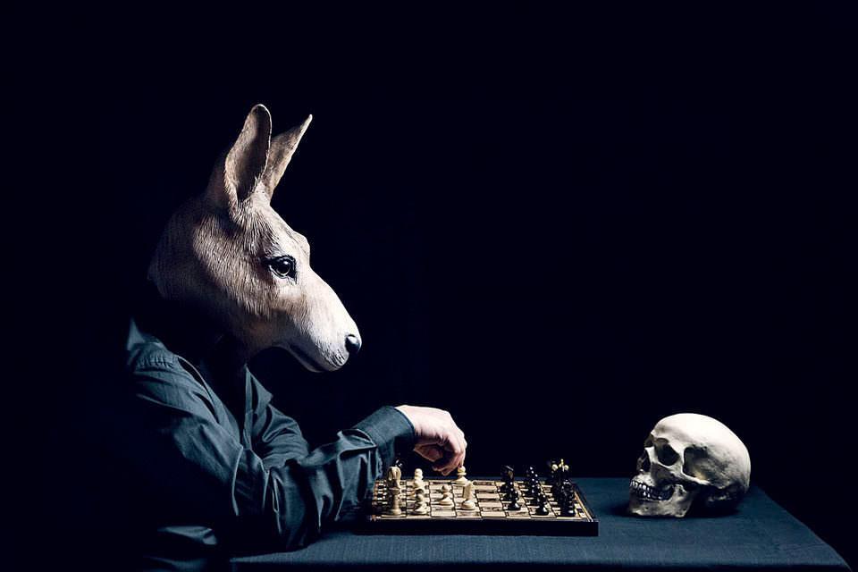 Ein Esel spielt Schach mit einem Schädel