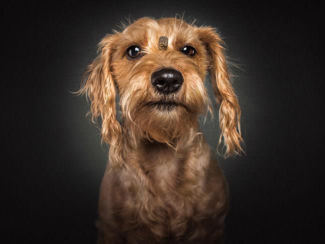 Ein Hund mit Leckerli auf der Stirn