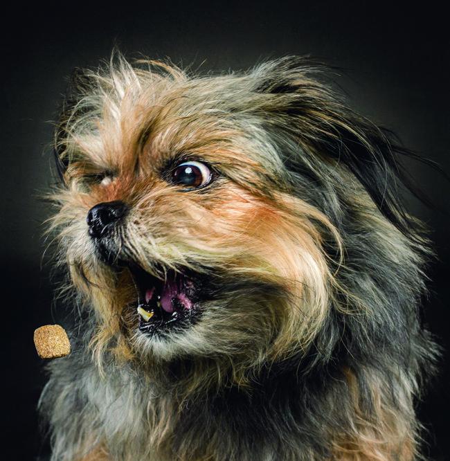 Ein Hund fängt ein Leckerli