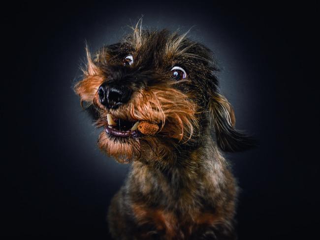 Ein Hundeportrait