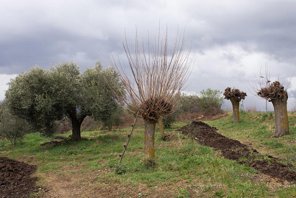 Ein Baum mit Leiter
