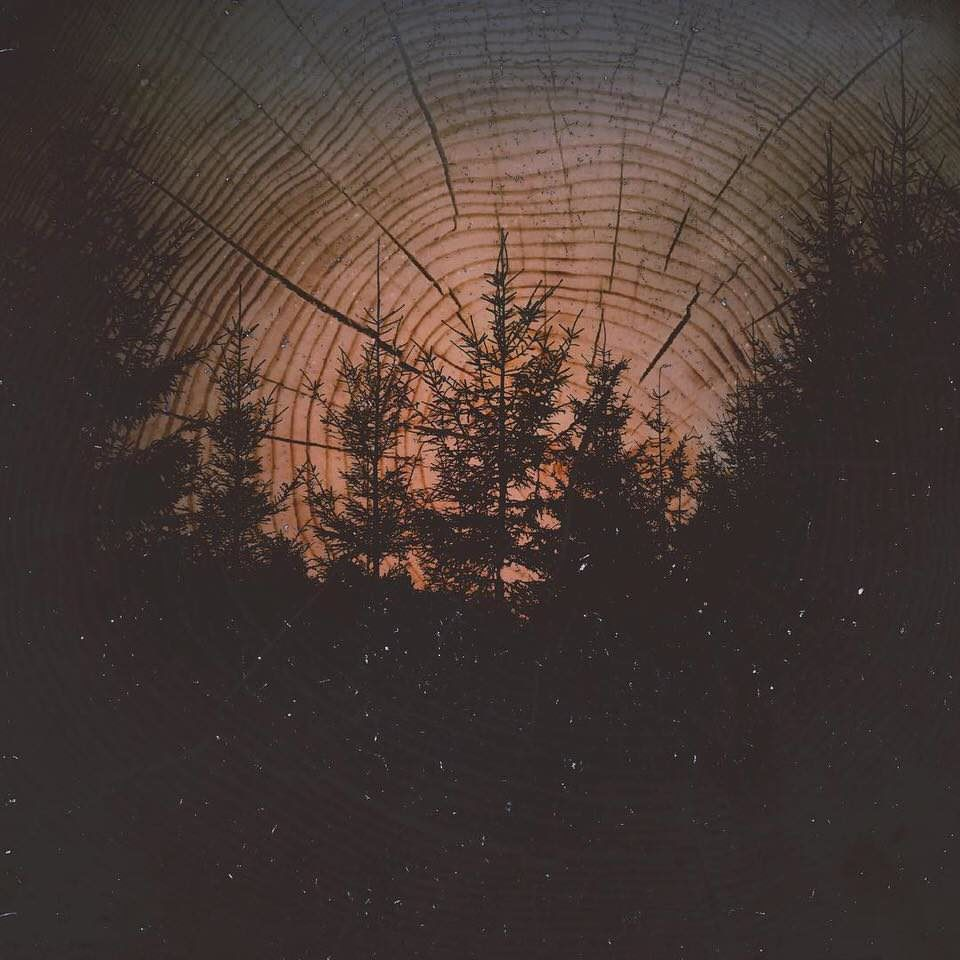 Doppelbelichtung aus Wald und einem Baumstamm