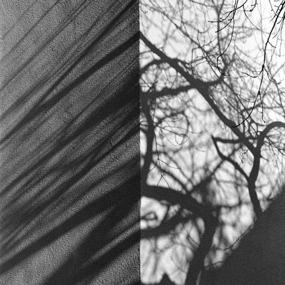 Schatten eines Baumes an einer Hauswand