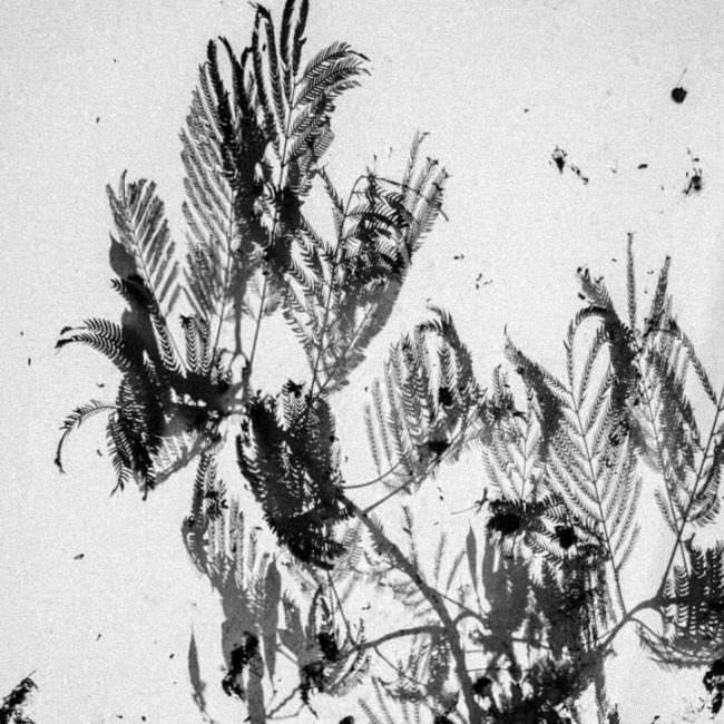 Schatten von Pflanzen