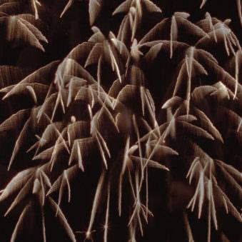 Ansicht von explodierenden Feuerwerkskörpern vor schwarzem Grund.