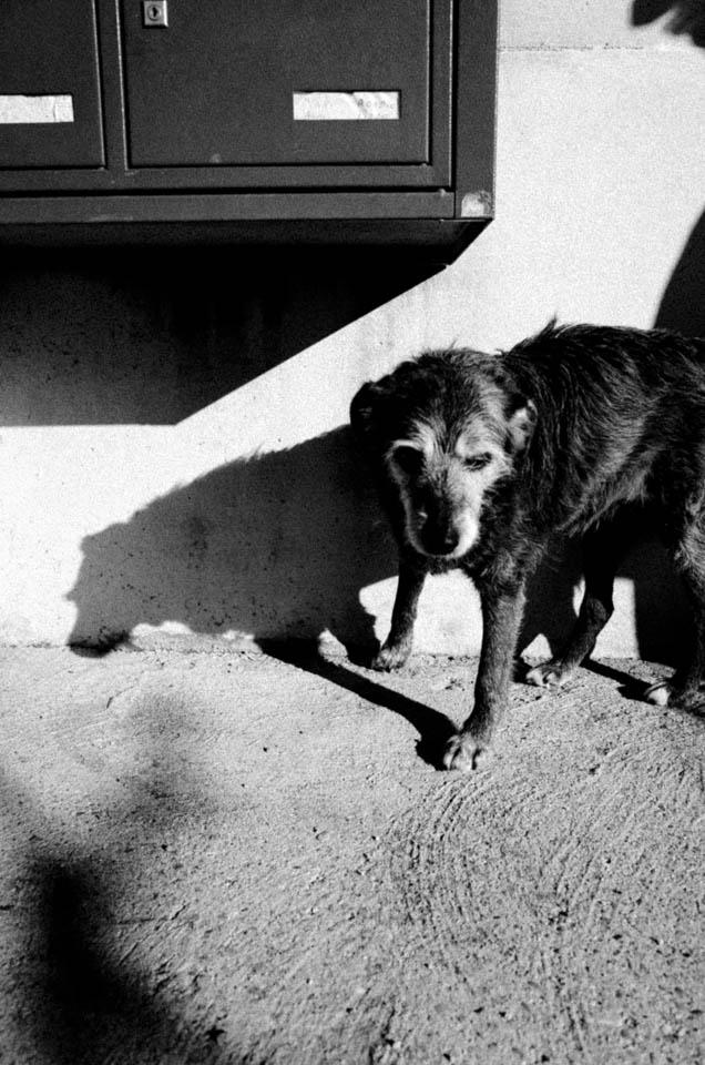 Ein Hund vor Briefkästen