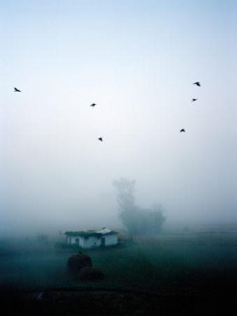 Nebel mit Vögeln am Himmel