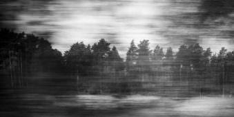 Schwarzweißfoto einer verwischten Waldlandschaft.