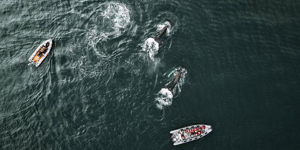 Drohnenaufnahme von Rettungsbooten und Wahlen auf dem Meer.