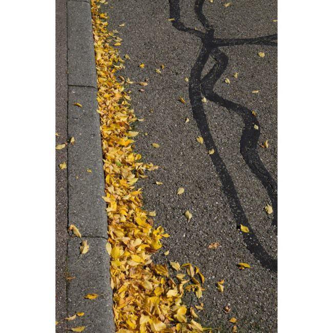 Gelbes Laub an einer Bordsteinkante mit Teerstreifen auf der Straße knapp daneben.