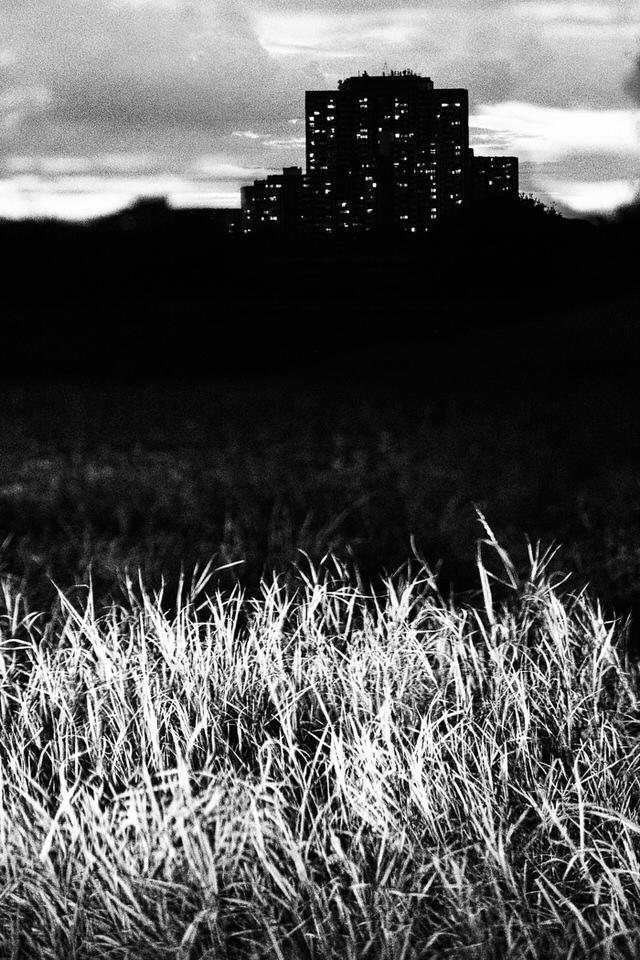 Ein dunkles Feld mit Hochhaus im Hintergrund