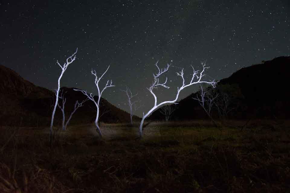 Bäume unterm Sternenhimmel